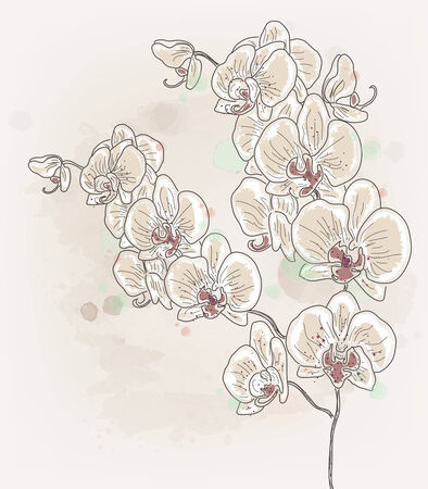 Orchid branch - watercolor style Vector
