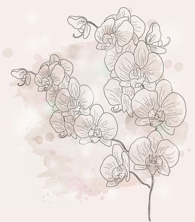 Hand drawn orchid branch Vector