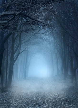 misty forest: Blue forest
