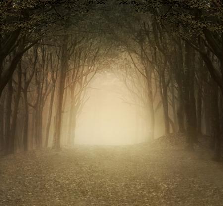 Enchanted natuur-serie - Goud mistig bos