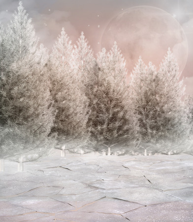 enchanted forest: Frozen winter forest