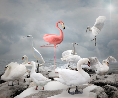 sea bird: Stand out from a crowd - Flamingo and white birds Stock Photo