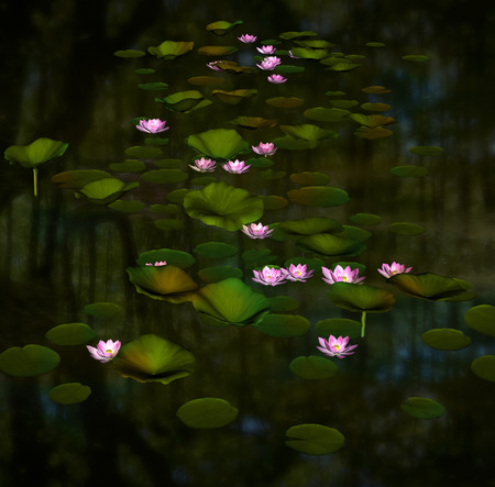 lily: Water lilies in a pond
