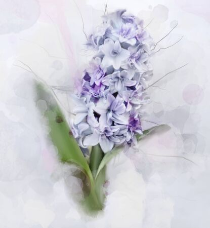 Spring and summer flowers collection? digital watercolor style hyacinth