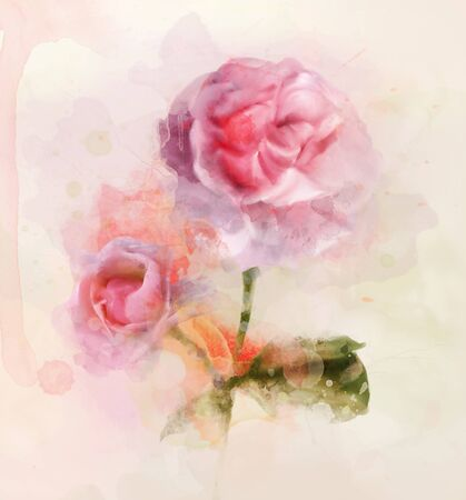 Pink roses in digital watercolor style 版權商用圖片