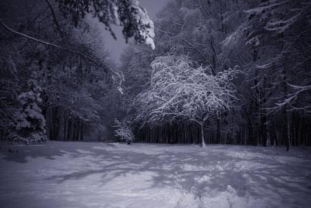neige qui tombe: Arbre contre-jour recouvert de neige contre les arbres sombres et lanterne. Sc�ne du parc. Tir� de la nuit. Banque d'images