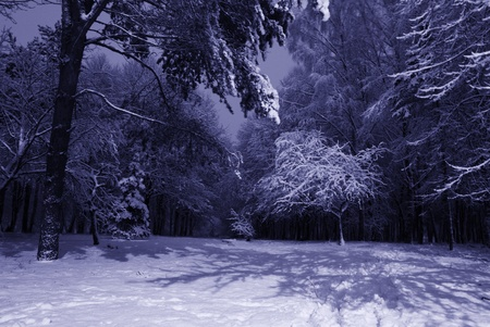 winter night landscape with dark snowy trees Park scene. Night shot. photo