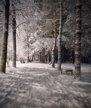 snow falling: paesaggio notturno invernale con neve scura Parco scena alberi. Notte colpo.