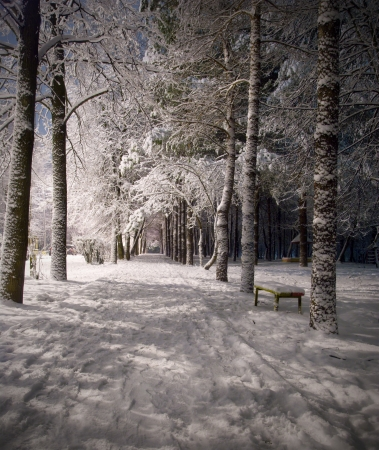 neige qui tombe: Paysage de nuit d'hiver avec sc�ne de sombres parc enneig� arbres. Vue de nuit.