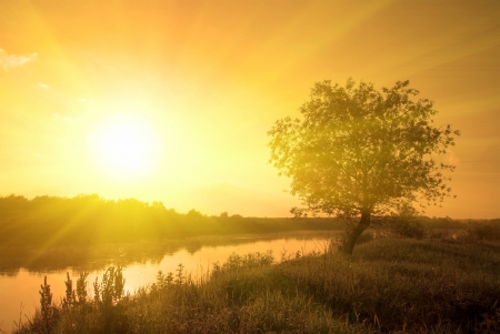 foggy morning sunny landscape with tree, grass and river Stock Photo - 11620756