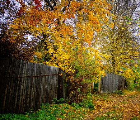 landscape with colorfull autumn park path and fence photo