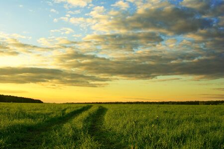 landscape with grass field and dramatic sky at sunset photo