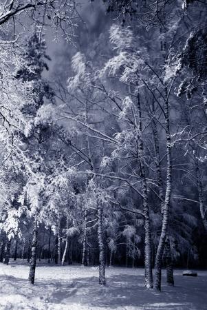 nuit hiver: Paysage de nuit d'hiver fonc� sc�ne du parc enneig� arbres. Nuit abattu. Banque d'images