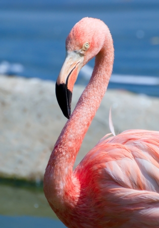 pink flamingo close-up portrait in Moscow zoo