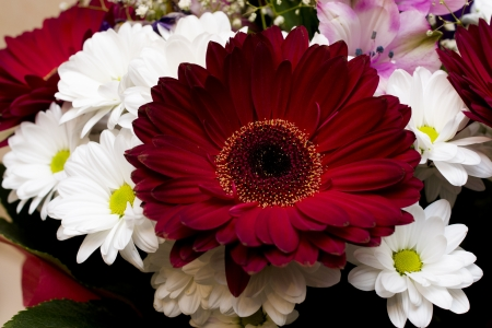 beautiful bouquet with white daisies and red gerberas