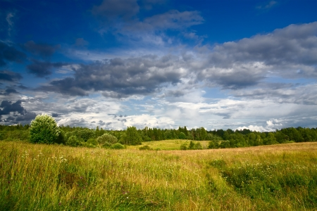 Green meadow and forest under blue dramatic sky with clouds