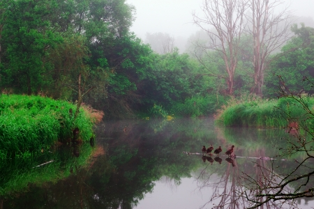 snag: foggy river landscape with grass, ducks, trees, snag