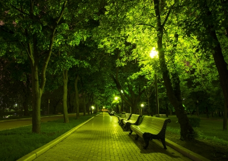 Night Park Wood Benches and Alley at summer