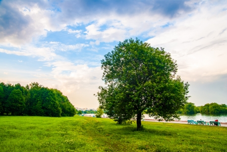 riverside tree: summer landscape tree river bench sky clouds Stock Photo