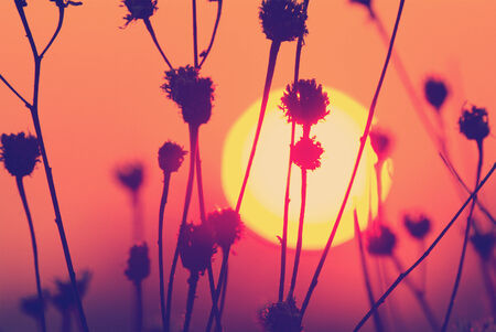 distant:   sunset landscape with sun over silhuette of dry grass Stock Photo