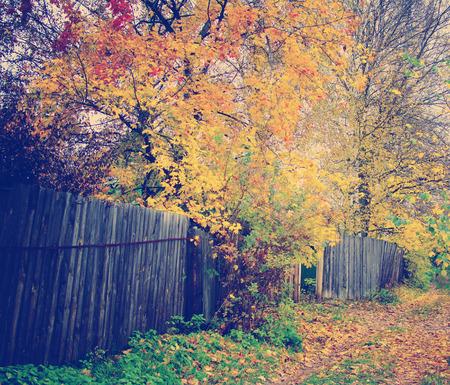 instagram nashville tone colorfull autumn park path and fence photo