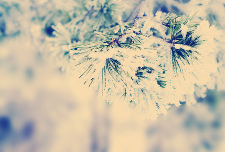 winter instagram nashville tone background with green christmas pine tree branch in snow and ice selective focus