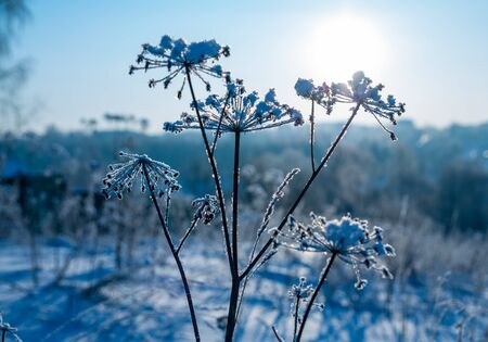 Frozen grass in snow winter landscape background