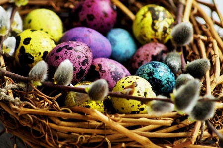 multi-colored quail eggs painted for Easter are in a basket with willow.