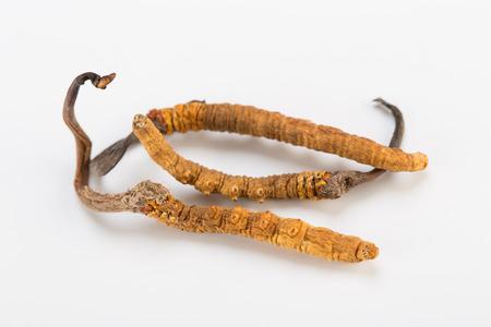 Cordyceps sinesis Yartsa Gunbu Yarsagumba himalayan gold Nepal isolated in white background Stock fotó
