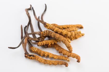 冬虫夏草 sinesis Yartsa Gunbu Yarsagumba ヒマラヤ ゴールド ホワイト バック グラウンドで分離されたネパール 写真素材 - 73676232