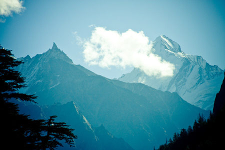 panoramas: Forest in mountains valley Himalayas