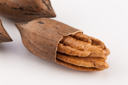 pekan: whole pecan nuts isolated on white background