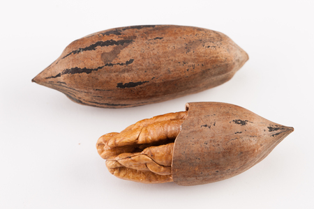 pekan: Pecan nuts isolated on white background