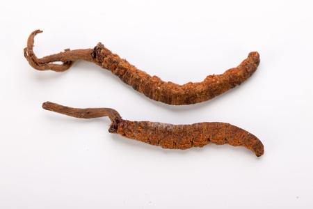 Cordyceps sinesis Yartsa Gunbu Yarsagumba himalayan gold Nepal isolated in white background Stock Photo