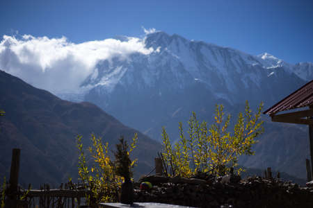 Trees and snowcapped peak at background in the Himalaya mountains, Nepal