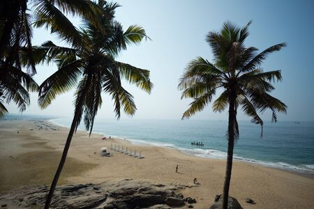 Palm and Ocean coast with big waves in India