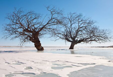 Winter Baikal, trees in an ice of lake. photo