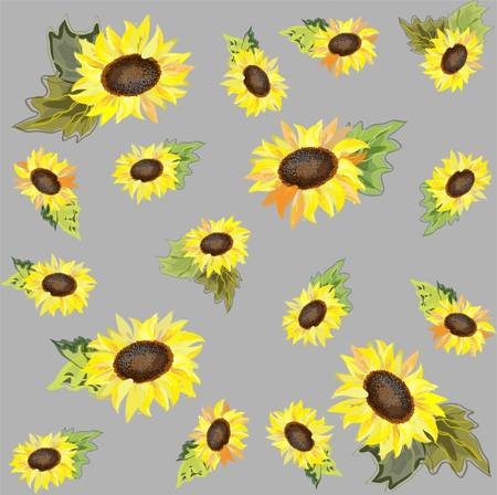 cor: Background. Sunflower.