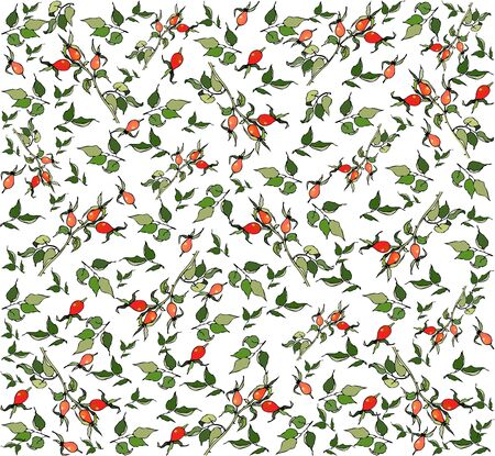 Seamless background with the image of berries of a dogrose. Vector