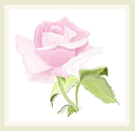 hand drown: Greeting card with rose. Illustration  roses. Illustration