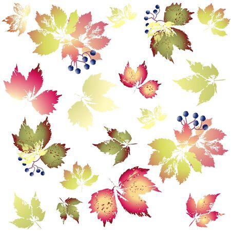 Seamless background.Illustration wild grapes. Autumnal background.       Vector