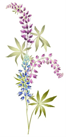hand drawn flower: Greeting card with lupine . Illustration lupines.