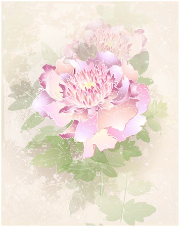 Greeting card with peony. Illustration peony.