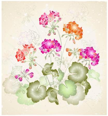 Greeting card with geranium. Çizim
