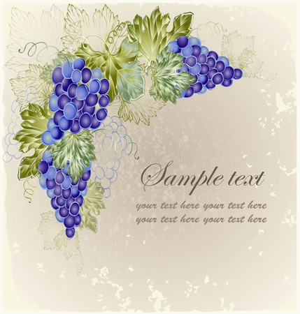 clusters: Vintage background with grape branch .