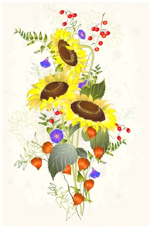 Greeting card with a sunflower. Vector