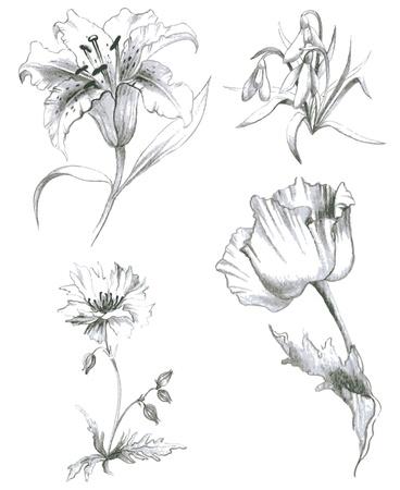 мак: Иллюстрация сад и дикие flowers.Lilies, мак.