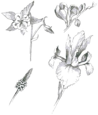 botanic: Illustration garden and wild flowers Illustration