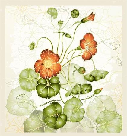 Greeting card with nasturtium. Illustration nasturtium. Vettoriali