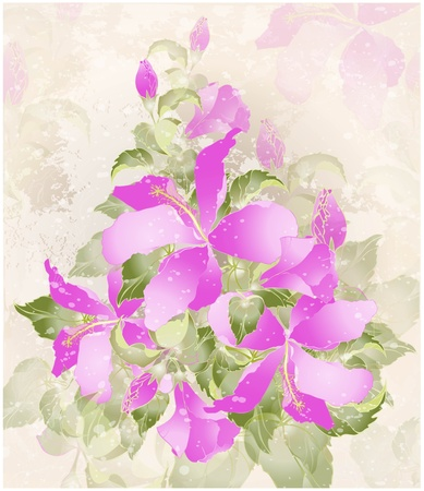 Greeting card with hibiscus. Illustration hibiscus. Stock Vector - 12248271